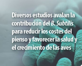 probioticos-produccion